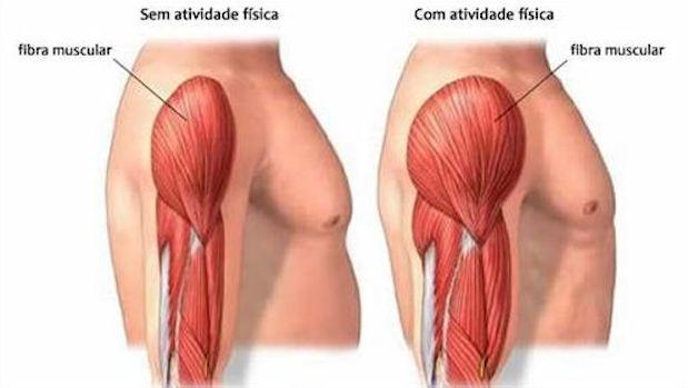 Suplementos alimentares - Fibras musculares